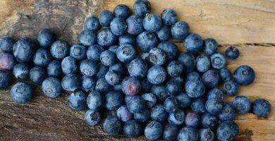 Arándanos, alimento para el cerebro - Superalimentos