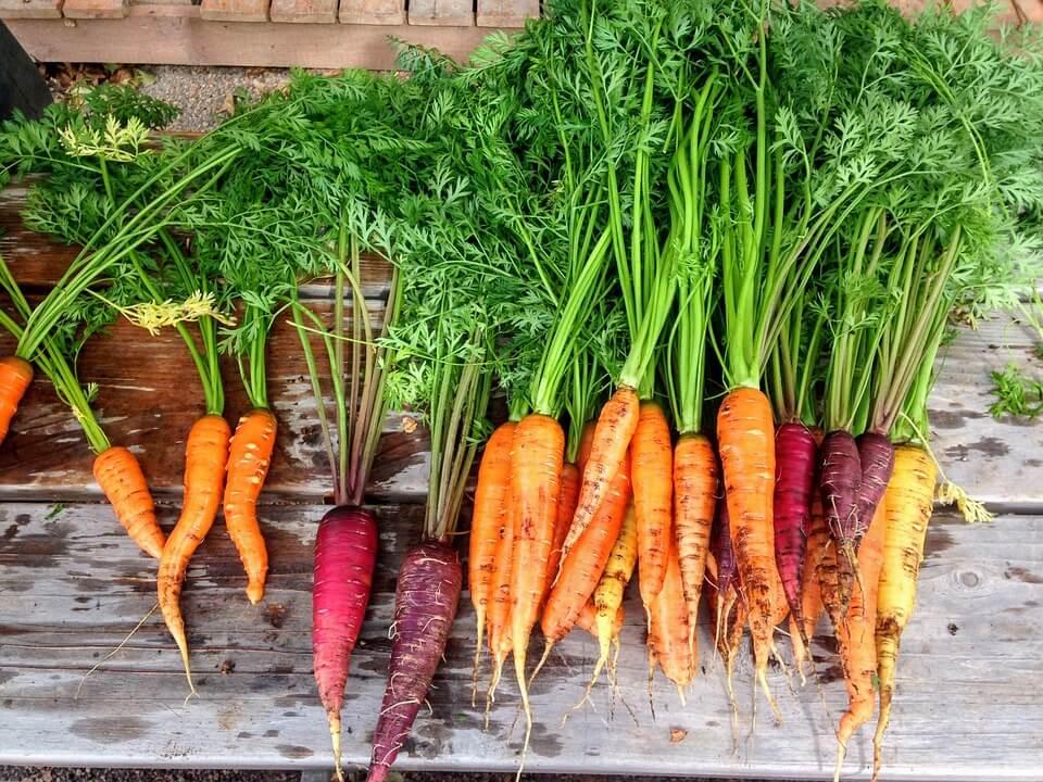 ¿Qué es la Zanahoria?