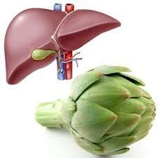 Cuida nuestro hígado
