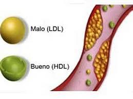 Mantiene niveles de colesterol bueno