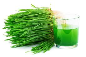 Beneficios de tomar hierba de trigoen tu dia a dia