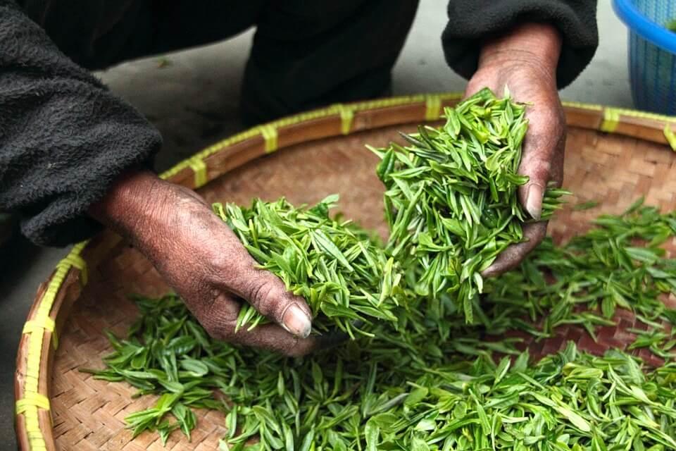 ¿Es cierto que el té verde adelgaza?