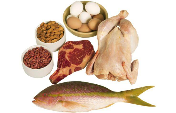 ¿Qué son las proteínas animales?